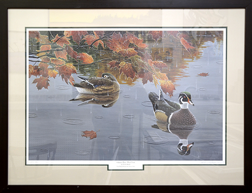 Autumn Rain, Wood Ducks by David Martin